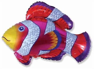 Рыбка Клоун, фольгированный шар 85 см - фото 5429